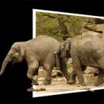olifanten-150x150